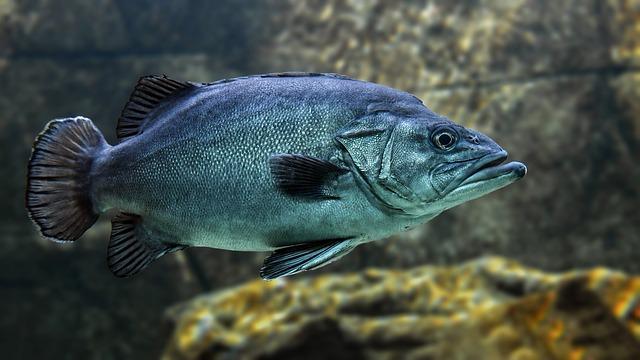 ryba ve vodě.jpg