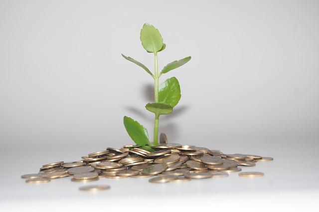 rostlina na mincích.jpg